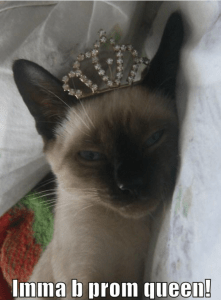 Siamese Cat Prom Queen