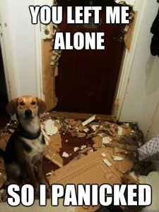 home alone panic