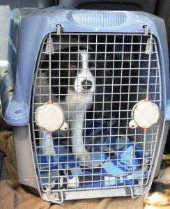 Dog Quarantine