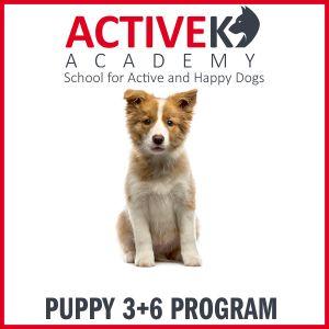 Puppy Program
