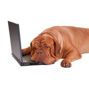 Stress Dog