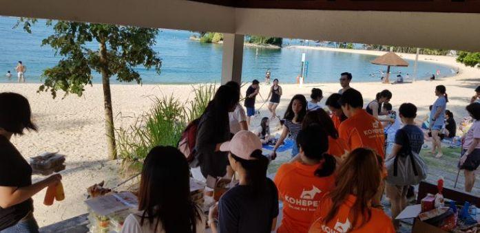 singapore corgi kohepets staff 2