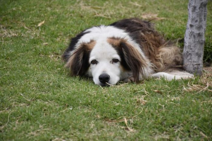 Stray Senior Dog