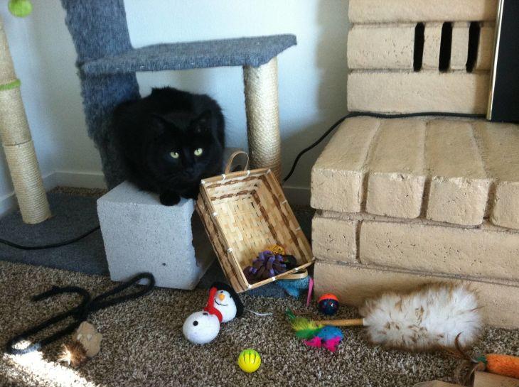cat toys entertain
