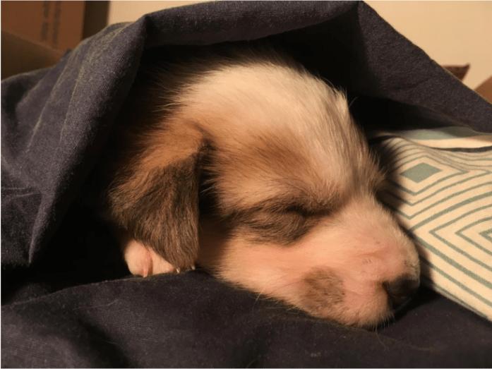 hazel sleeping