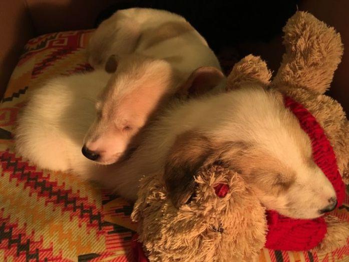 hazel & harvey sleeping