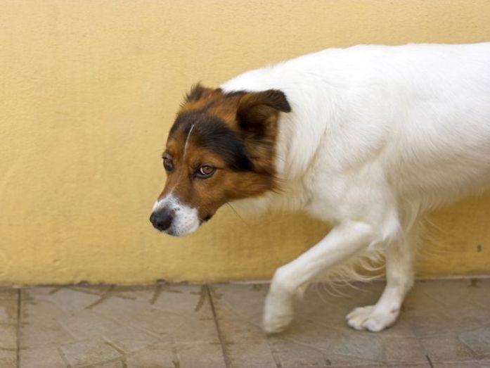 dog defensive