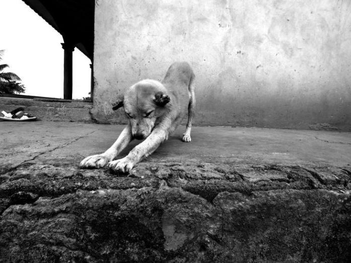 Old Dog Stretch