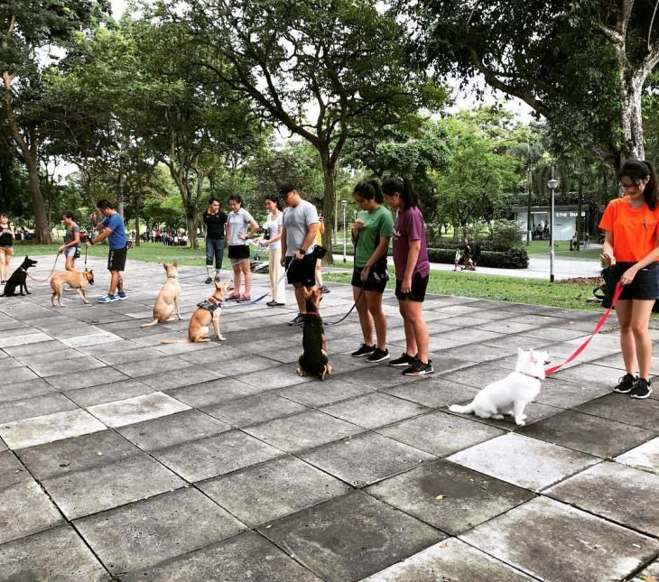 Active K9 Academy Dog Training Singapore