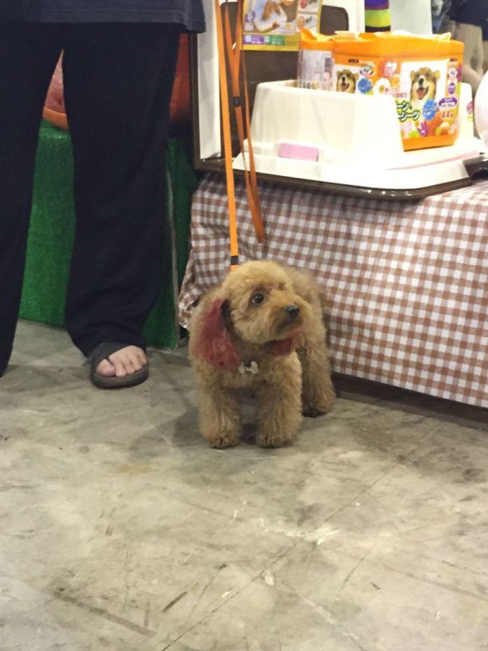 singapore-pet-expo-2015-394