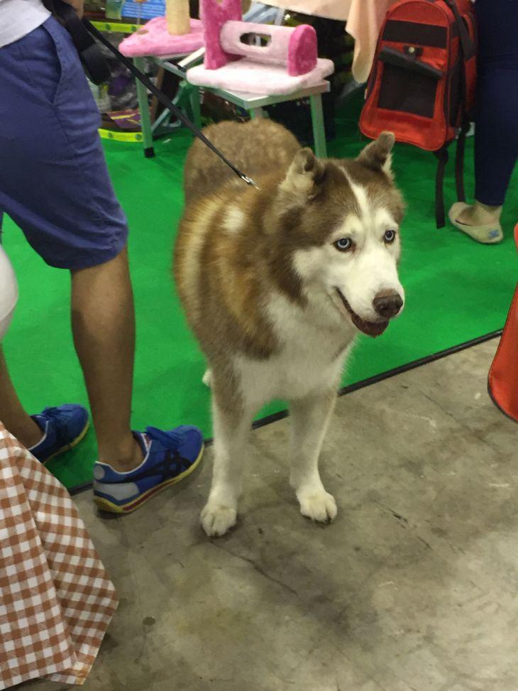 singapore-pet-expo-2015-378