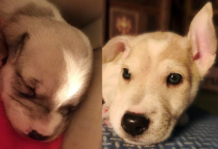 Harvey before after