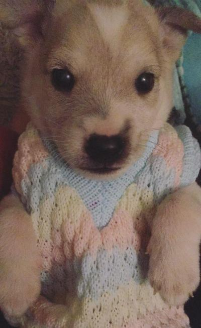 newborn puppies warm