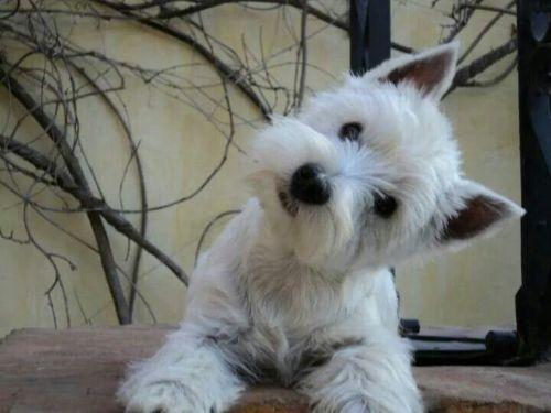 understanding your dog head tilt