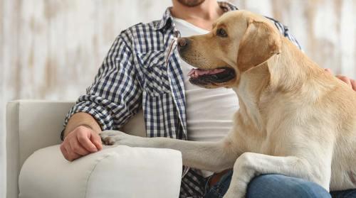 understanding your dog needy