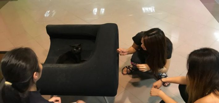 nus-cat-cafe-cover