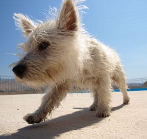 fur whitening allergy stains