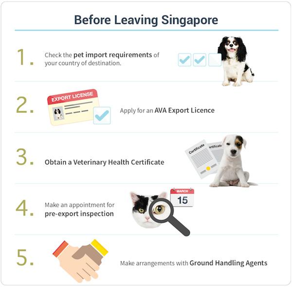 AVA Dog Export