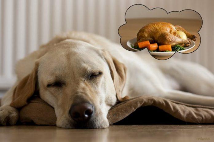 Dreaming Dog