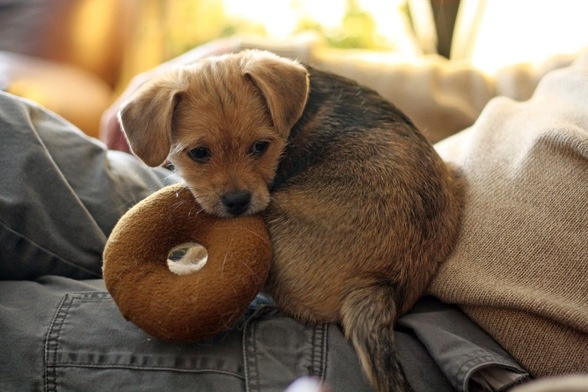 Best Toys For Your Dog