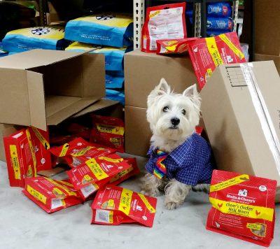 Kohepets freeze dried dog food