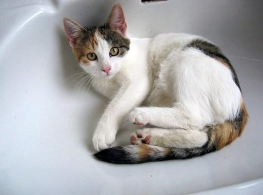 cat-336270_640