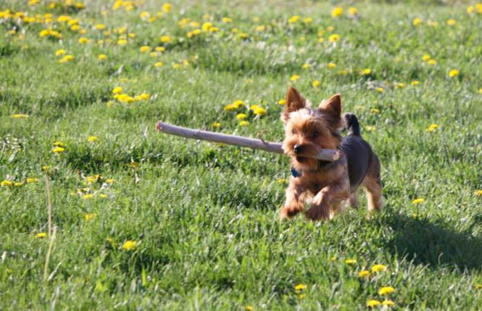 cute-dog-running-with-stick