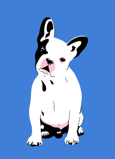 French Bulldog. 2018. (Mike Bliss)