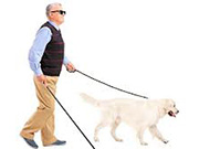 Blind man led by seeing eye dog