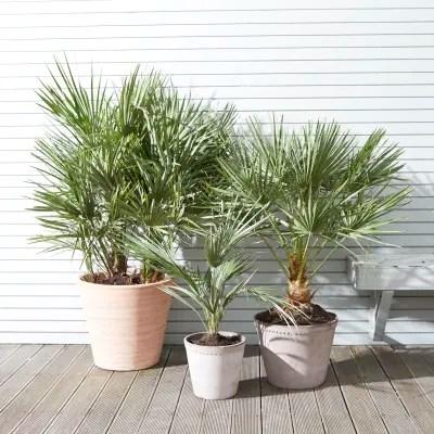 10 best outdoor plants patch