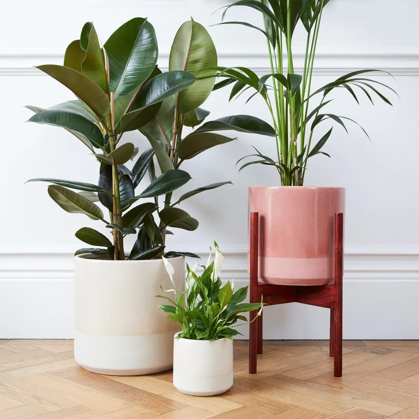 Large Indoor Plant Pots Delivered In London Patch