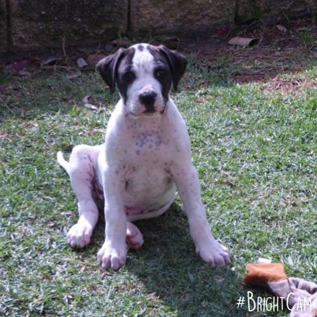 hugo absolute model pup