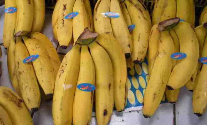 pisang2_ghi8k7