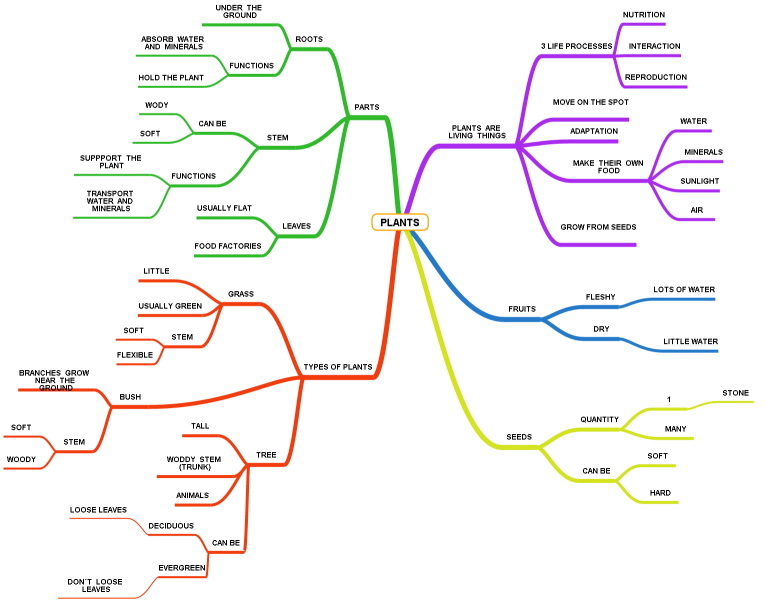 Plants - Mind Map