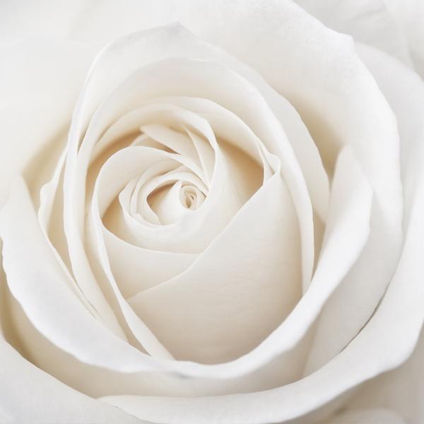 Sympathy Card Messages Wishes Serenataflowers Com