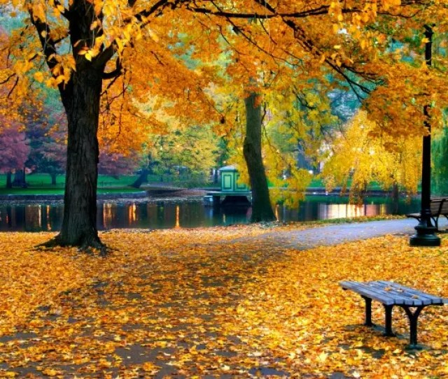 Fall Public Garden