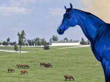 Big Lex: the famous Blue Horse of Lexington