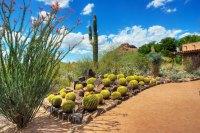 Desert Botanical Garden | Phoenix Outdoors Stories