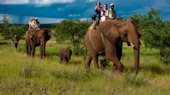 The Ideal Place To Vacation For Fauna Lovers Elephant
