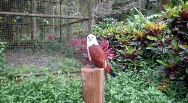 2016 05 pec eagle 2