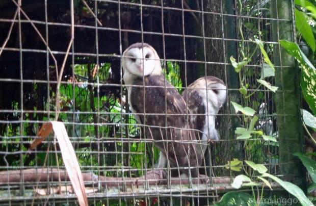 2016 05 pec owl