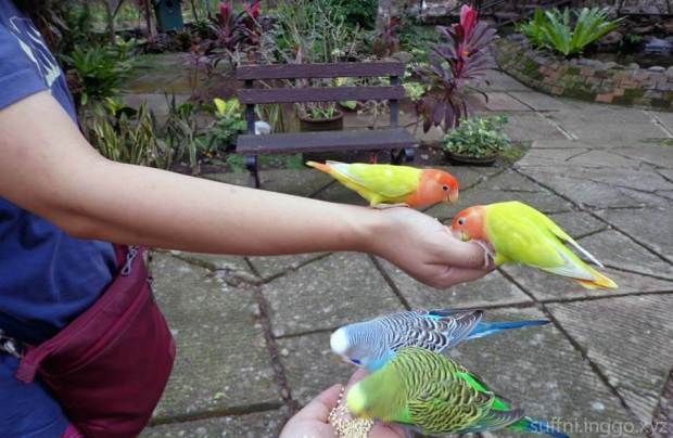 2016 05 malagos birds 1