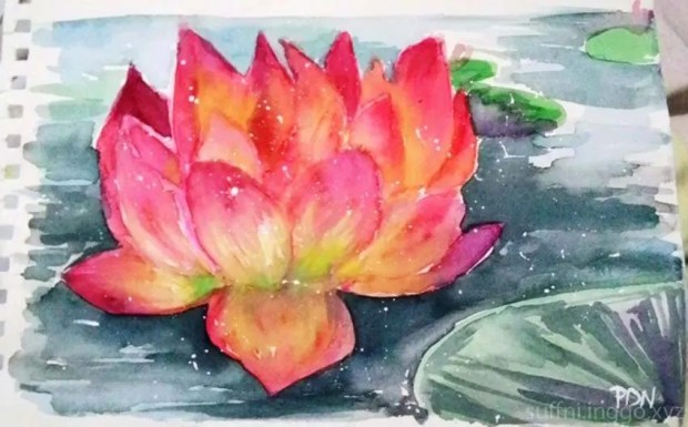 2016 03 waterlily1