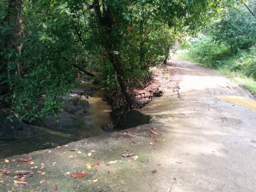 A creek runs along and under the road