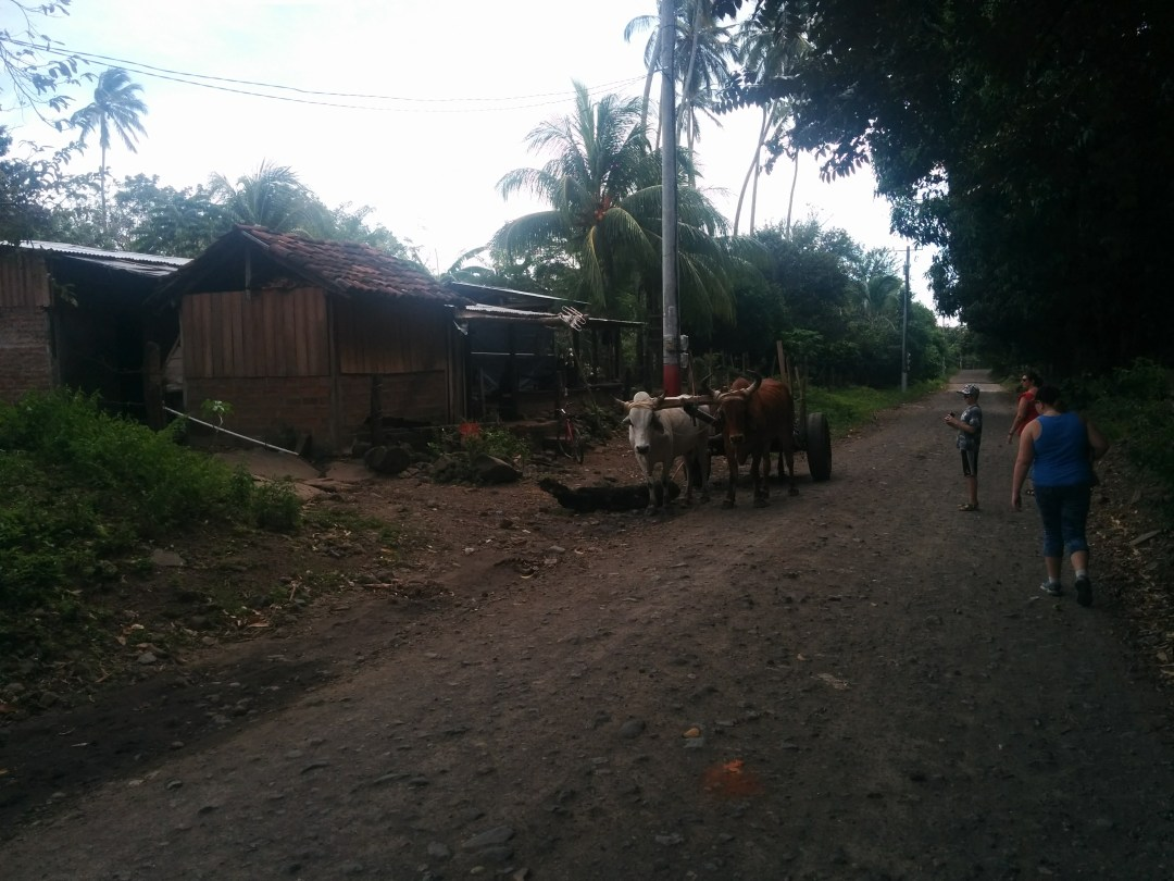 Working animals are common along Ometepe's roads