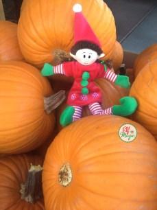 Elf in pumpkins patch