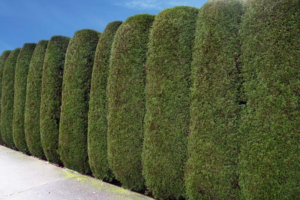 Hedges Services Nz