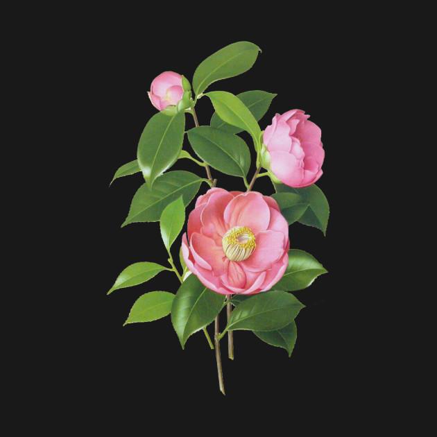 camellia flower flowers botanical