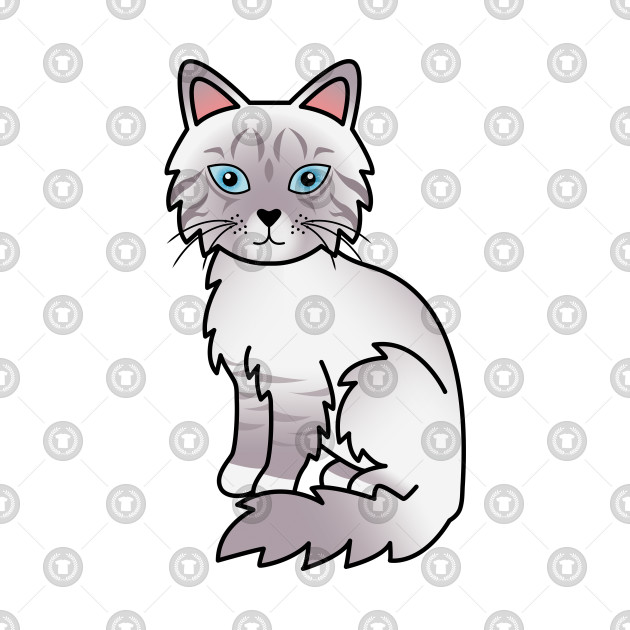 lilac point tabby birman