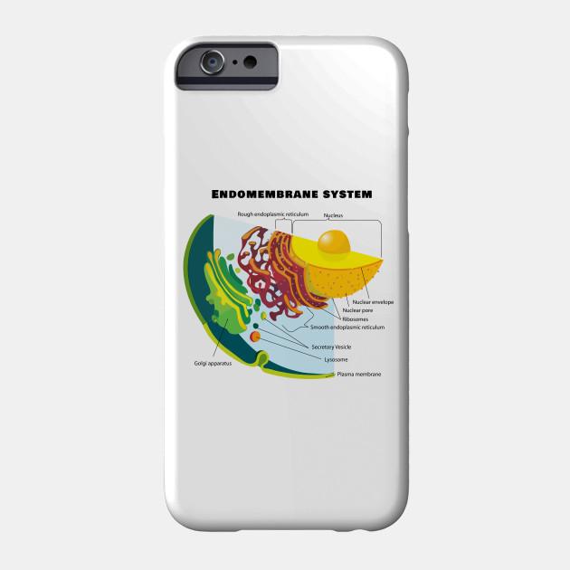 eukaryotic endomembrane system cell diagram yamaha g2 golf cart starter generator wiring on a eukaryote chart biology phone case